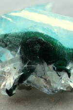 dino-fossils8