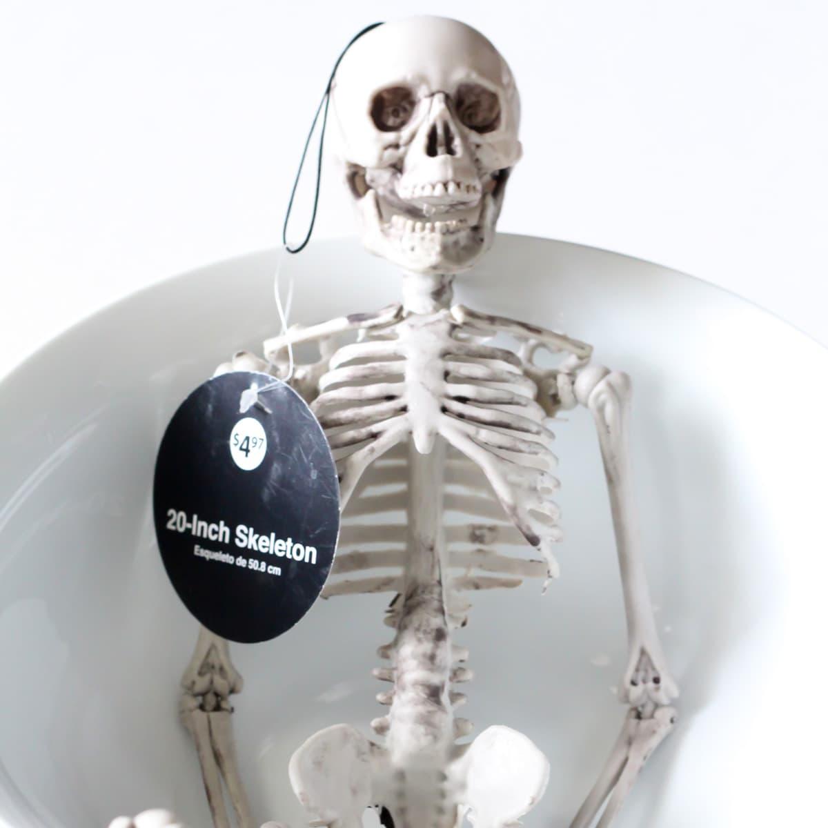 Skeleton in a white bowl